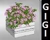 carm  custom flowers