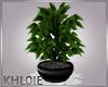 black pot plant K