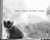 Lonely kitten 1