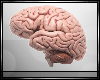 P| Brain Avatar