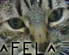[FEL] I&F