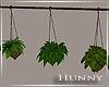 H. Hanging Plants