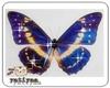 bluebutterfly2(pet)