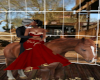 horse back love