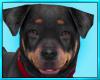 Rottweiler Dog Decor