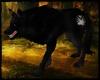 [G] Wolf Lupus S. Sombra