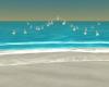CD Toez Beach Lights