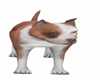 Pit Bull Dog Pet