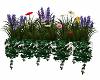 *MM* wall n window plant