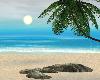 Beaches Paradise