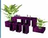 purple bar with plant