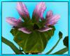 Enchanted Flower Seat