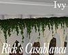 [M] Rick's Ivy