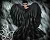 Dark bird wings