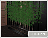 ENC. LUXURY PLANT
