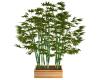 Beautiful Bamboo Plant