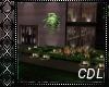 !C* Classic Modern Home