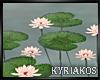 -K- Water Lilies