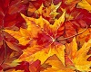 Full suit autumn fall