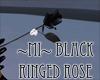 ~MI~ Black Ringed Rose