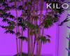 """ Lit Bamboo"