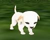 Adorable pet Dog