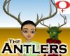 Antlers -Female