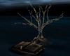 Divinity Island Tree