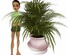 pink kiki plant
