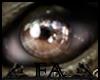 FA ♐ ET Eyes