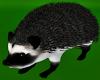 Dark Pygmy Hedgehog