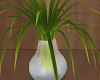 Hairdresser Plant