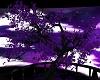 purple trees 2