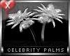 Celebrity Palms