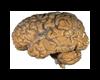 head  cervel