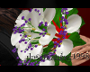 [dc] white calla lilies