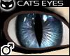  SIN  Cat's Eye - Blue