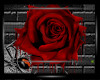 (D)Blood Rose