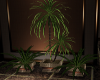 ~LS~ Intimate Plant