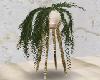 Home / Plant 1