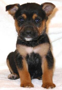 Cute-puppy Raft