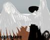 White Angel Wings