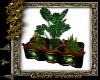 Celtic plants