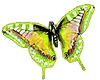 TF* Small lime Butterly