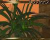 J2 Egypt Papyrus Plant