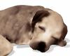 E* Sleeping Dog