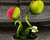 Animated Plant