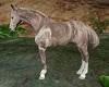 tan horse whit poses
