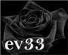 rosa negra2
