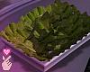 e lettuce tray